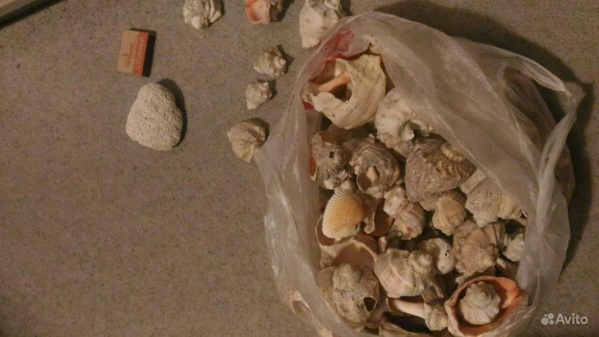 Ракушки рапаны раковины с Чёрного моря купить на Зозу.ру - фотография № 3