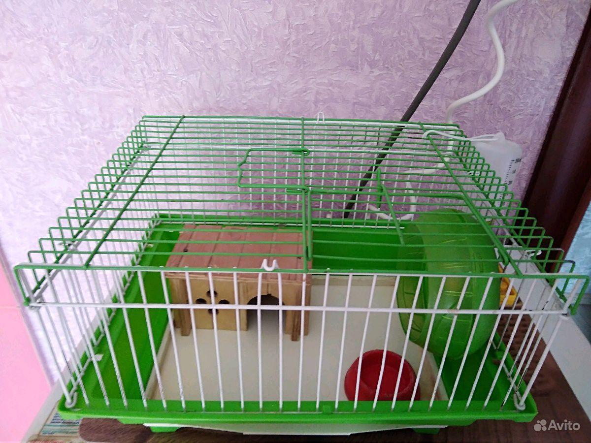 Клетка в Рязани - фотография № 1