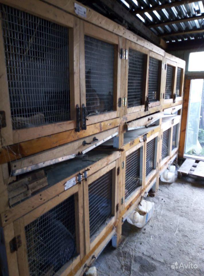 Кролики и клетки в Минеральных Водах - фотография № 1