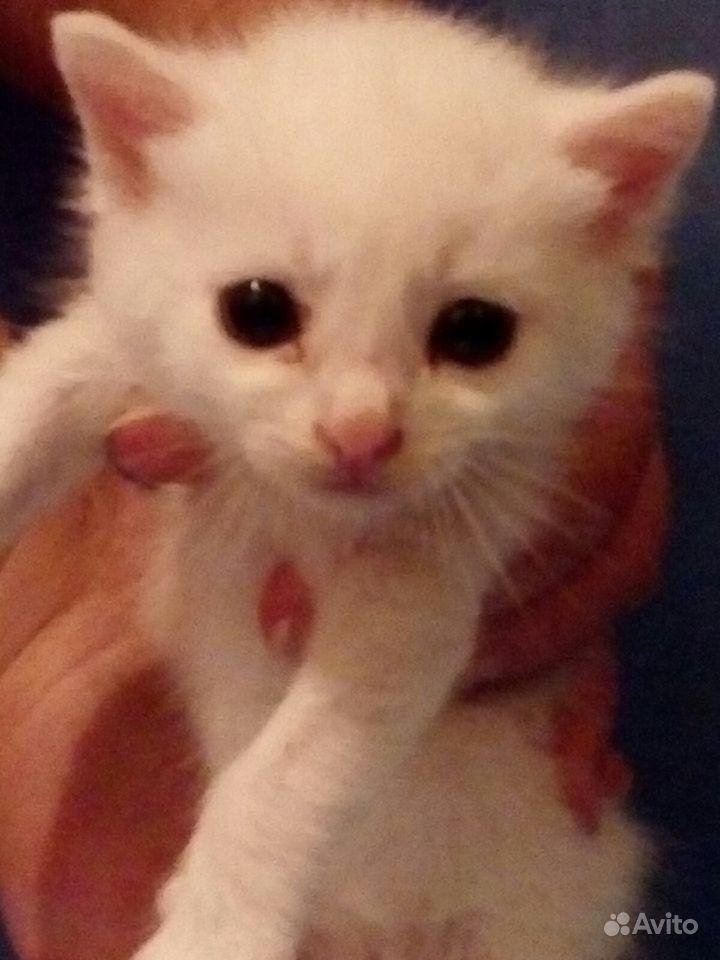 Котёнок 2 недели девочка