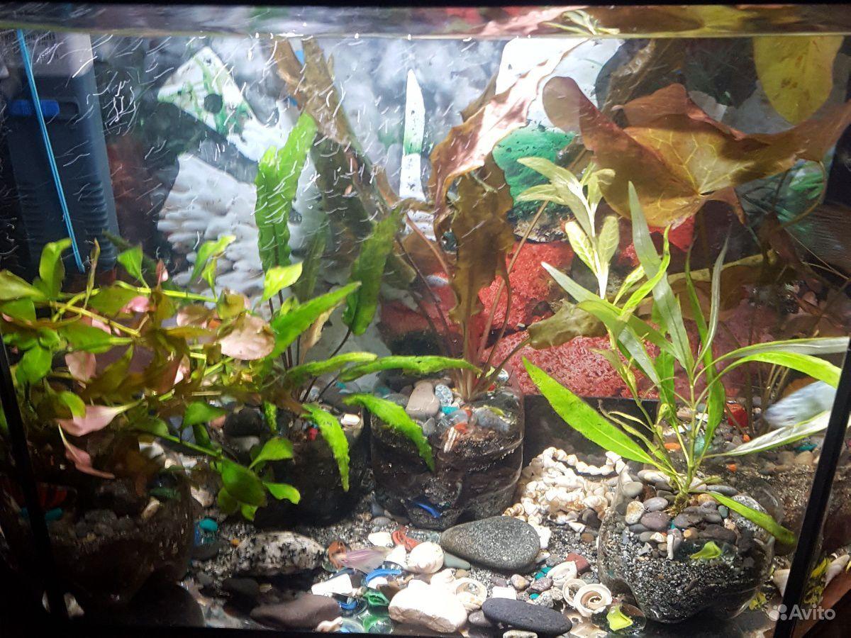 Аквариум вместе с рыбками+фильтр+растения купить на Зозу.ру - фотография № 3