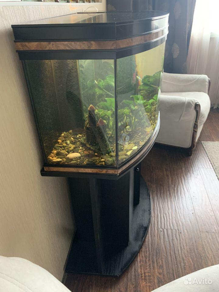 Панорамный аквариум 200л, укомплектован, Франция купить на Зозу.ру - фотография № 4