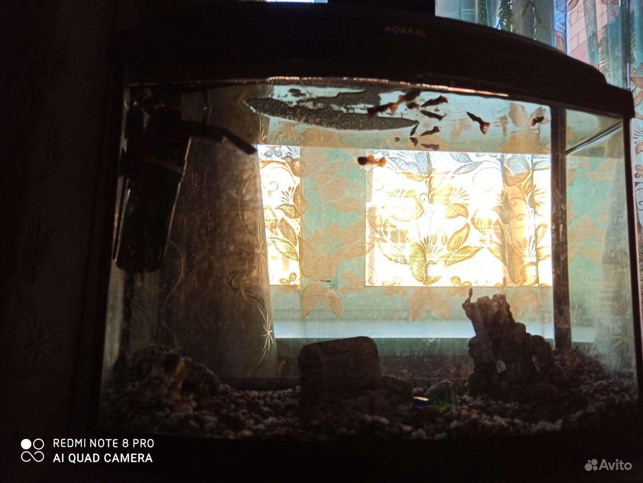 Аквариум, рыбки гуппи купить на Зозу.ру - фотография № 4