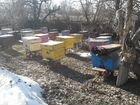 Пчелы с ульями и без