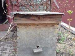 Ловушка для пчёл (роевня)