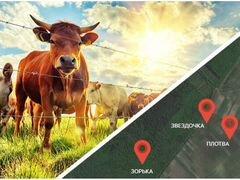 GPS трекер для лошадей и крс