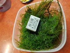 Рождественский мох, он кристмас