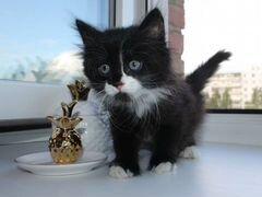 Пушистый котенок, девочка