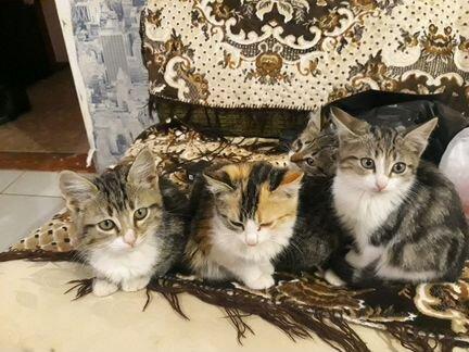 кошки фото в пролетарске ильей оба взрослые