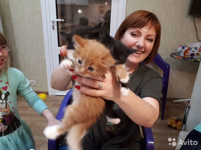 Авито ивановская область кошки