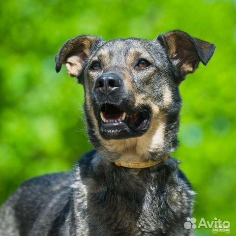 Собака в добрые руки купить на Зозу.ру - фотография № 3