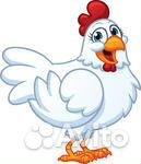 Продам Куриц 5 шт