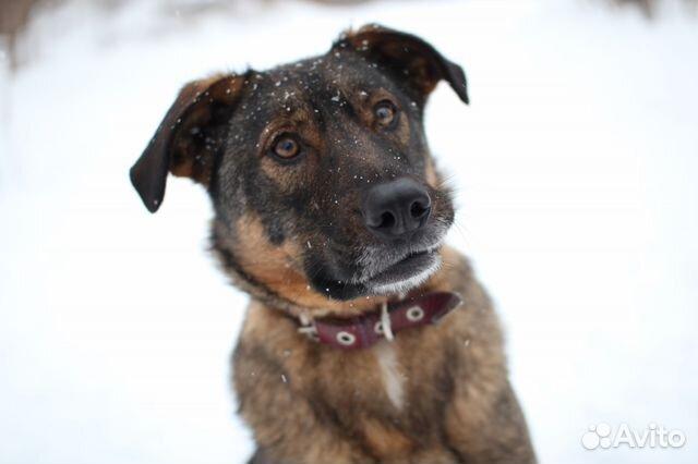 Собака в дар некрупная купить на Зозу.ру - фотография № 4