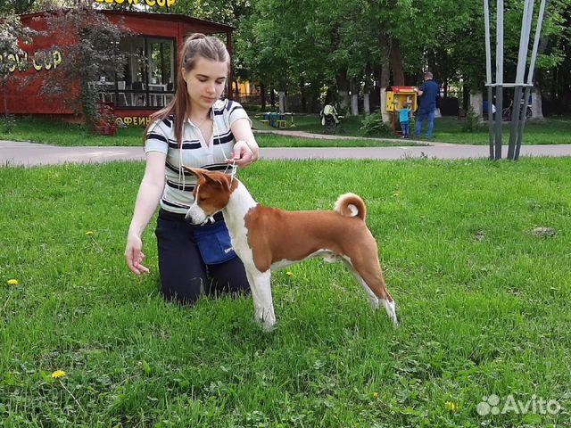 Кобель для вязки купить на Зозу.ру - фотография № 3