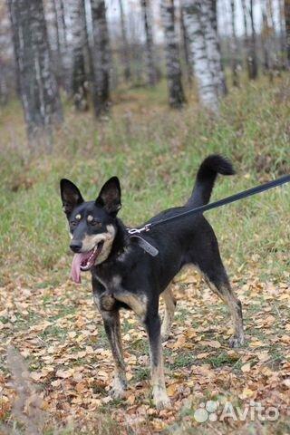 Собака в дар купить на Зозу.ру - фотография № 2