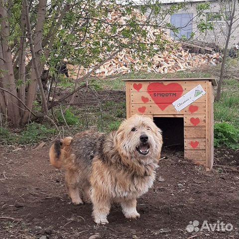 Собака маленькая 89635001357 купить 1