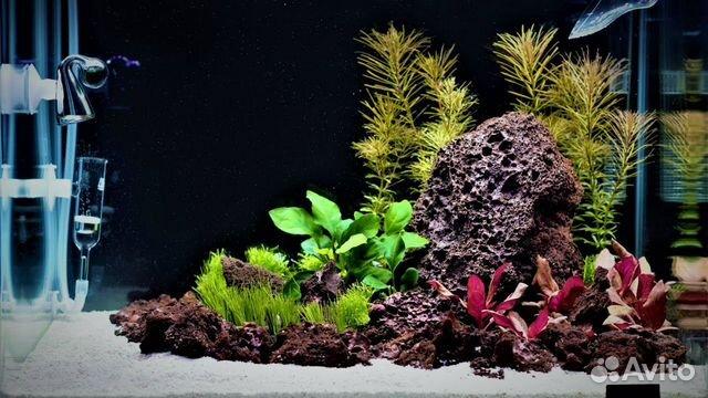Вулканическая Лава камни 1 - 5 кг для аквариума 89504050813 купить 3