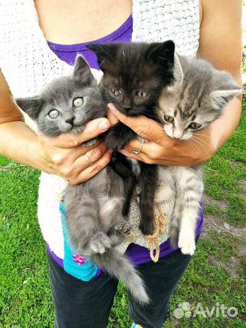 Котята от деревенской мышеловки  89524264767 купить 1