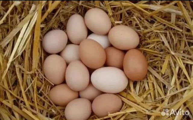 Яйца домашний, 12шт  89302894122 купить 2