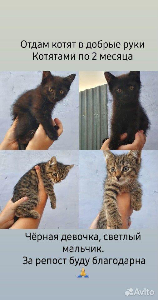 Отдам в добрые руки котят  89879270316 купить 1