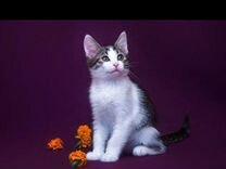 Чудесные малыши котята ищут дом