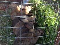 Продам кролов и крольчих