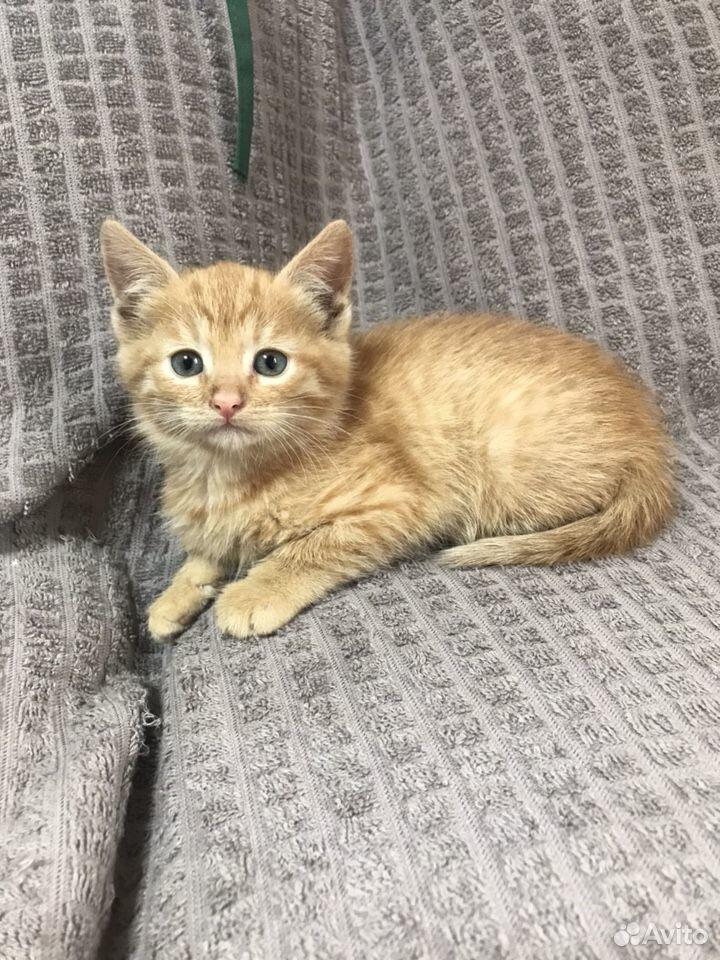 Рыжий котенок девочка