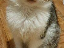 В добрые руки — Кошки в Геленджике