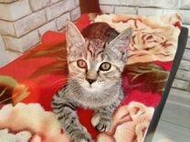 Пушистый комочек Вашего счастья ждет Вас — Кошки в Геленджике