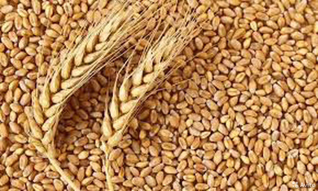 Обмен, к приобретению, зерно