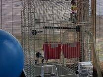 Клетка для попугая кореллы