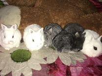 Декоративные крольчата,хороший подарок